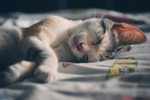 gatito-durmiendo